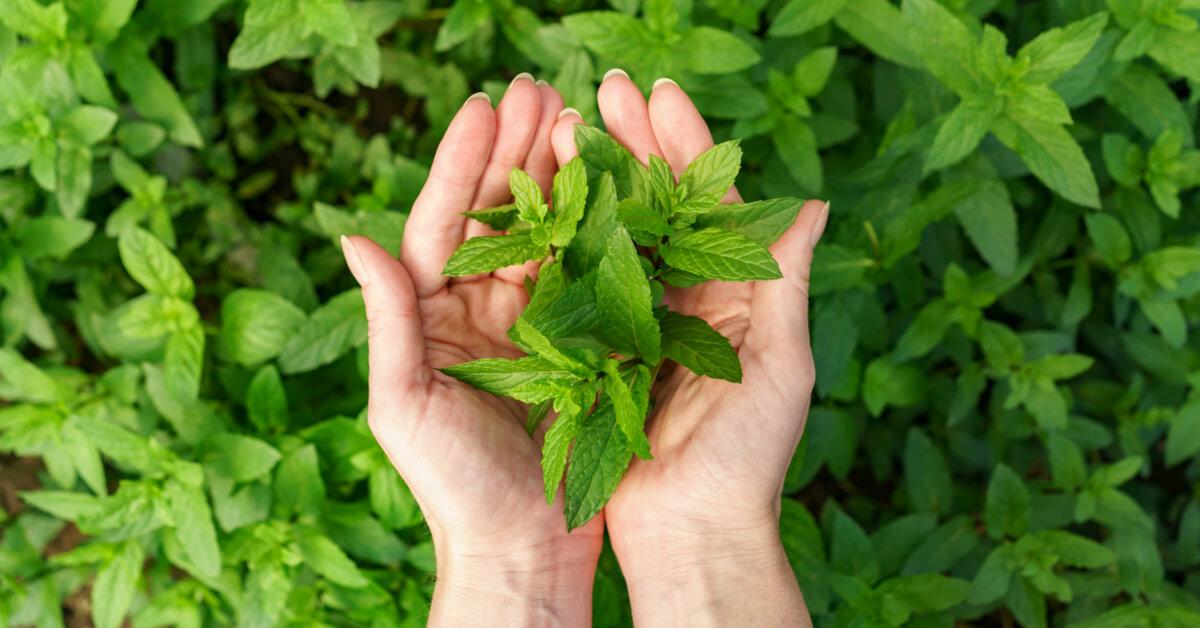 Gyógynövényekkel az egészségért